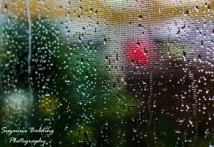 Rain through the flyscreen. 50mm ISO 200 1/20s F/3.2
