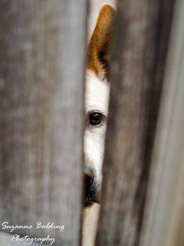 Hi dog.