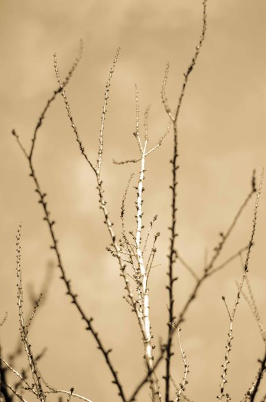 Late afternoon light on my bare apricot tree